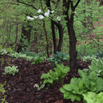 Mulching Tips to Make Your Yard Look Great
