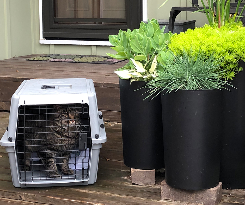 Moving Tips When You Have A Pet